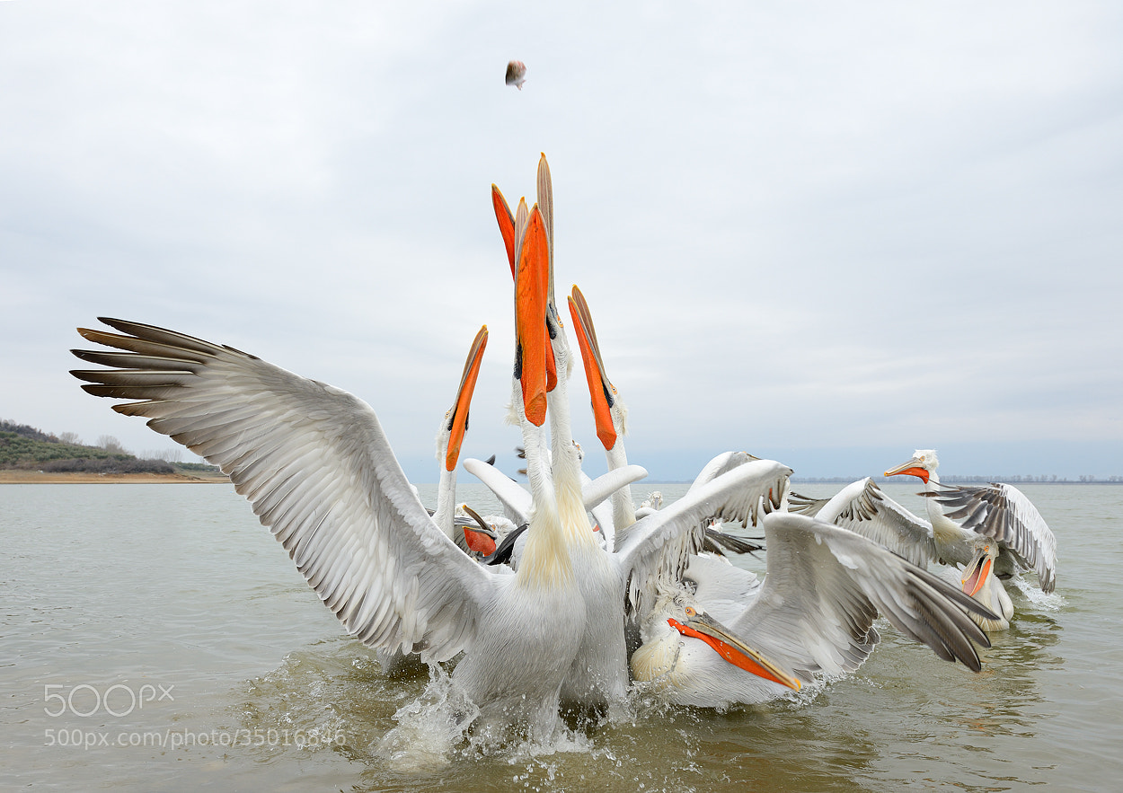 Photograph The Flying Fish by Harry  Eggens on 500px
