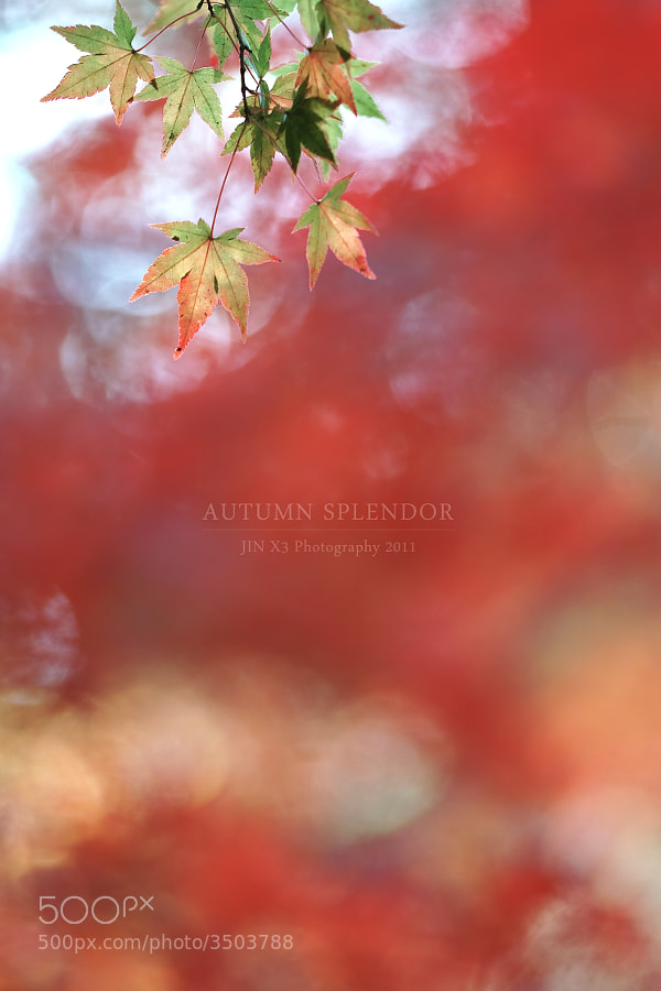 Autumn Splendor by Junya Hasegawa (JIN-X3)) on 500px.com