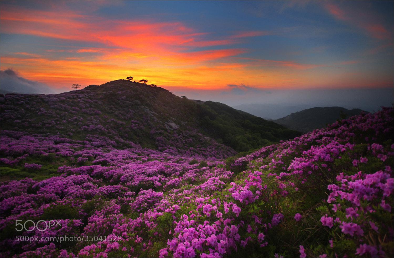 Photograph Royal Azalea & sunrise by Woosra Kim on 500px