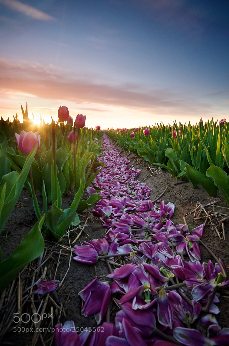 Photograph Path of the Petals by Martijn van der Nat on 500px