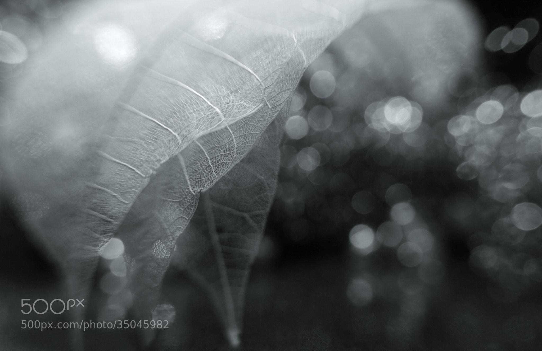 Photograph Feathery by Shihya Kowatari on 500px