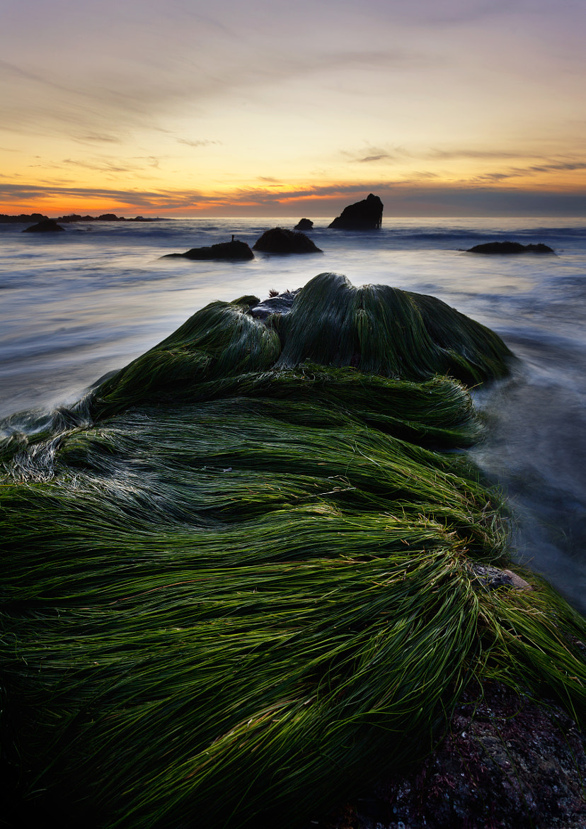 Photograph Comb Over by Tyler Brigham on 500px