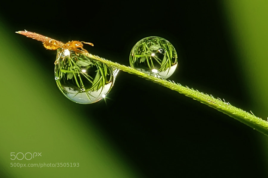 Photograph double dew by teguh santosa on 500px