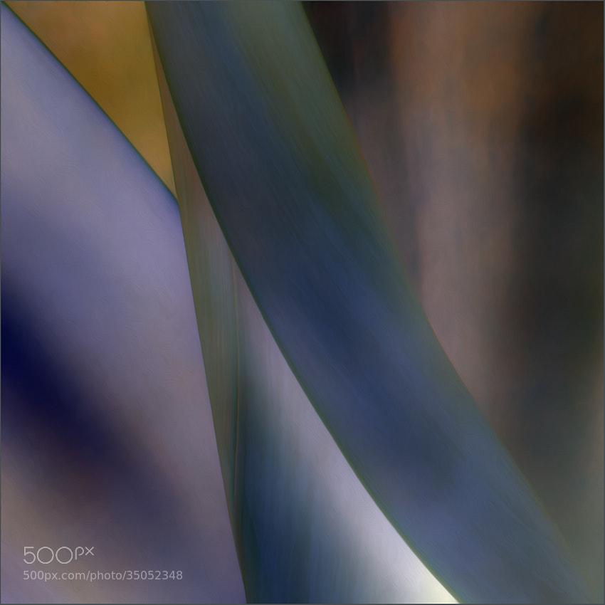 Photograph agav-art by Gilbert Claes on 500px