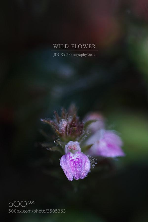 Wild Flower by Junya Hasegawa (JIN-X3)) on 500px.com