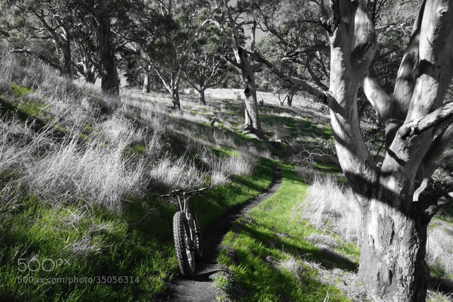 Yurrebilla trail by b s (bcdsom)) on 500px.com