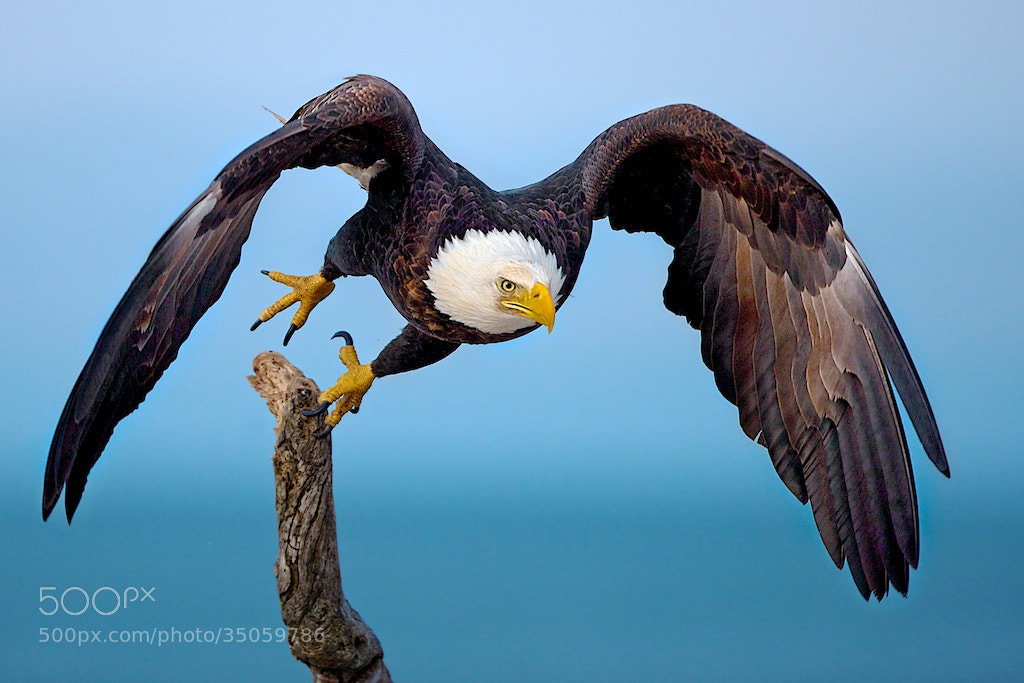 Photograph The Take Off by Buck Shreck on 500px
