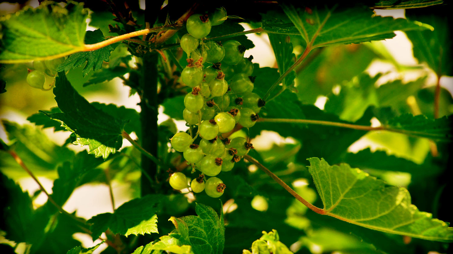 Photograph Currant by Marina Samusheva on 500px
