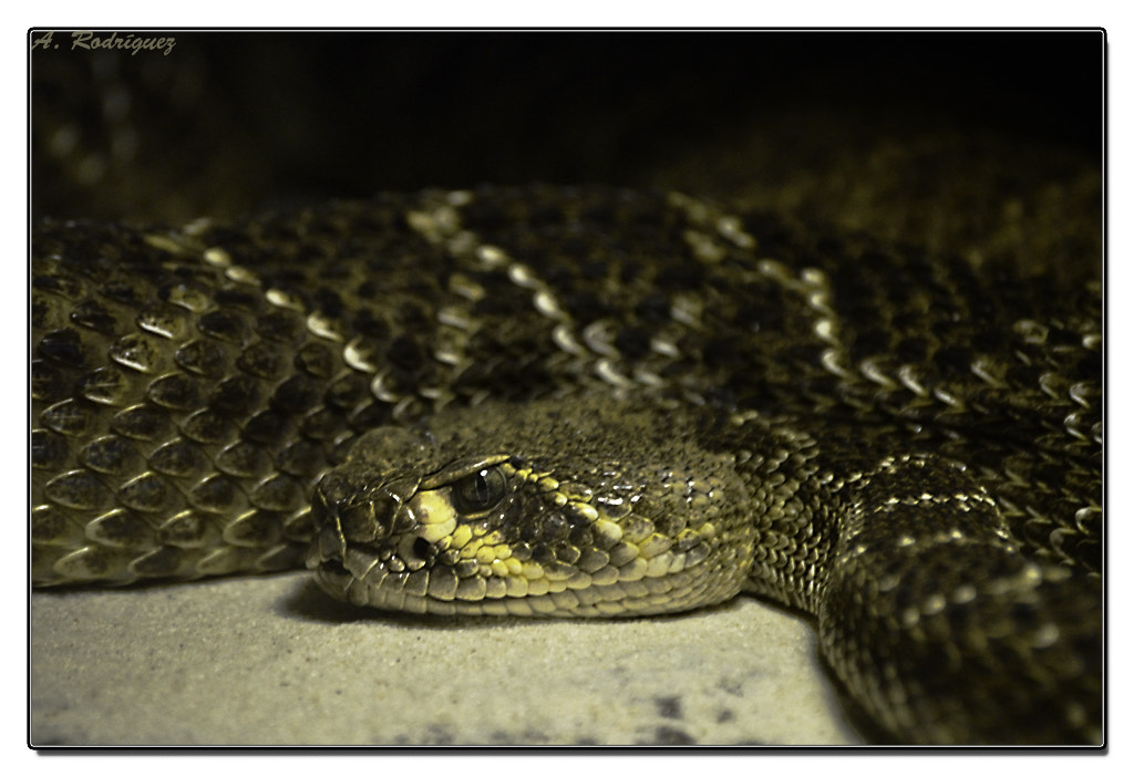 Photograph Serpiente by Alejandro Rodriguez on 500px
