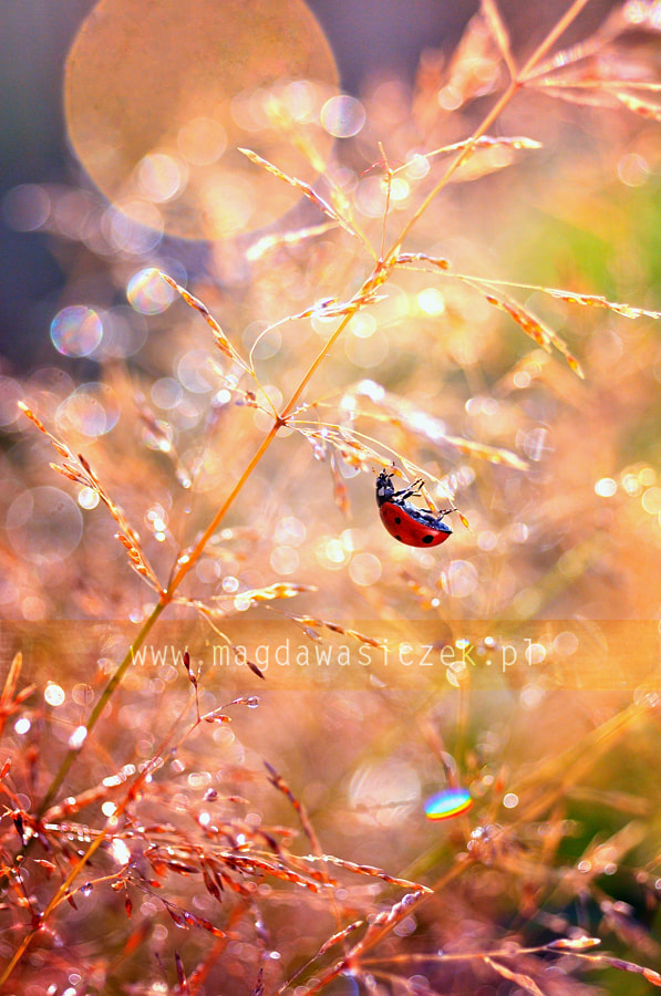 Photograph Stories from the meadow by Magda Wasiczek on 500px