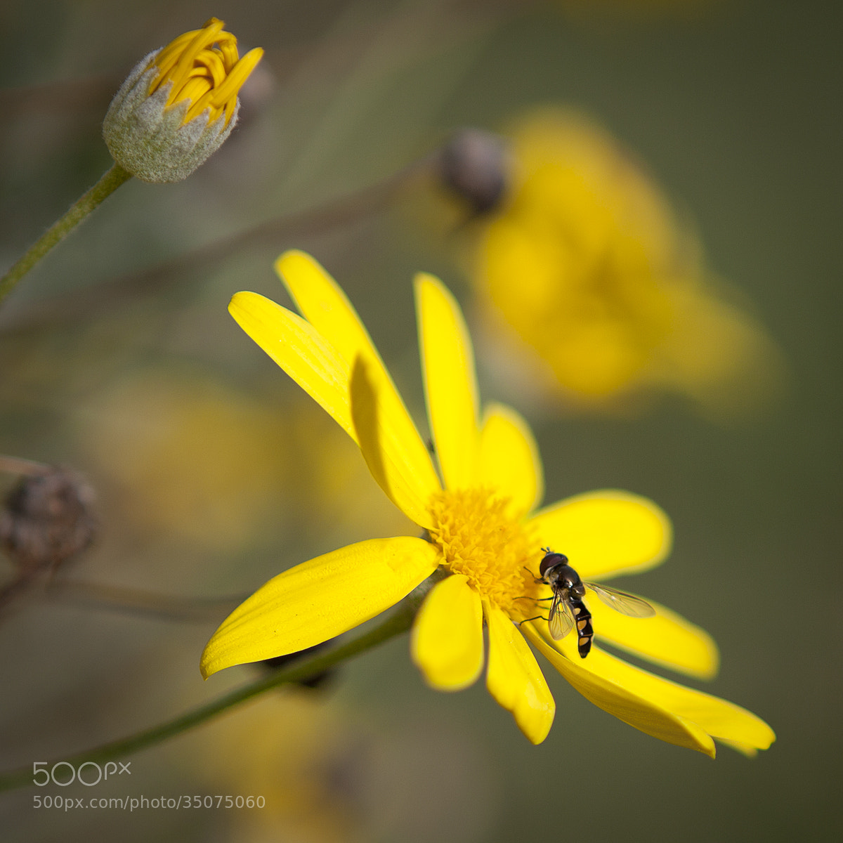 Photograph Yellow Flower by Tony  Law on 500px