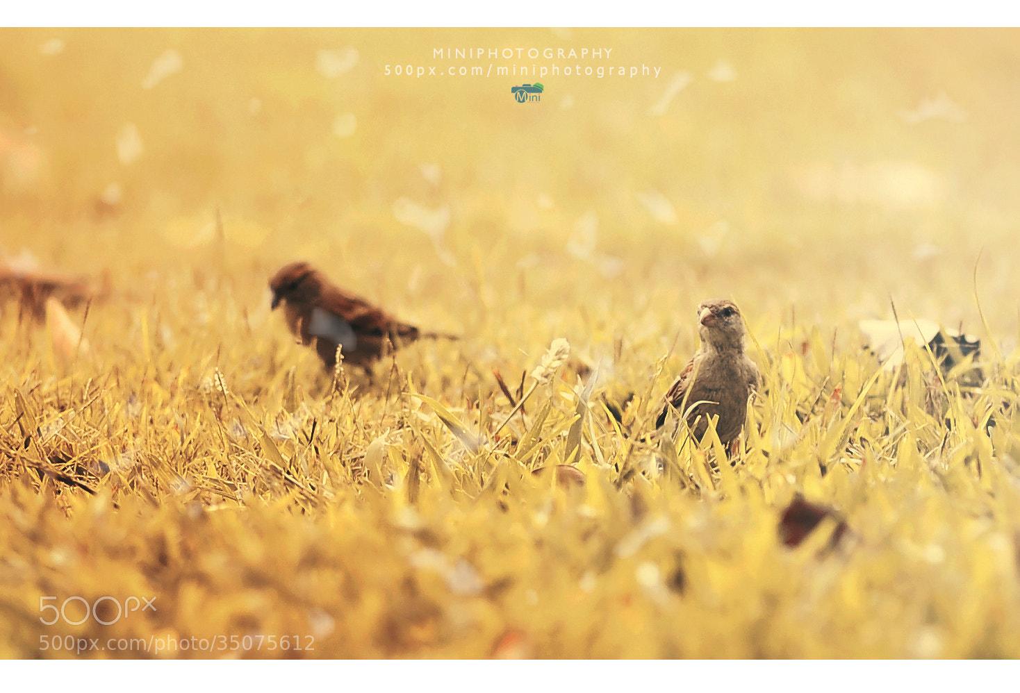Photograph I'm bird  by Mini pun on 500px