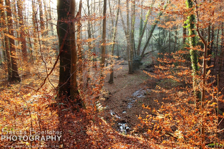 Photograph Forest in autumn IV by Sascha Böttcher on 500px
