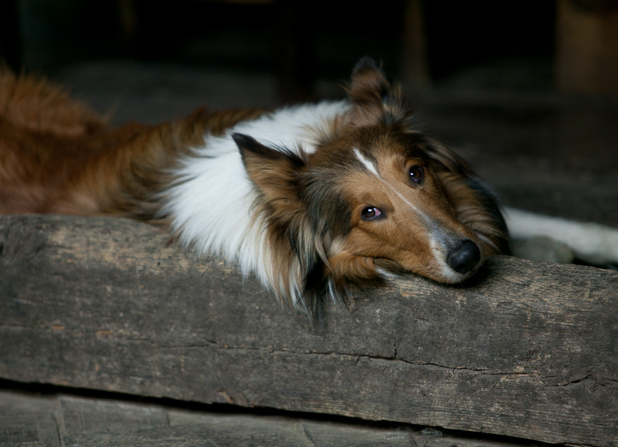 Photograph Lassie's Lost Brother by Kip Cole on 500px