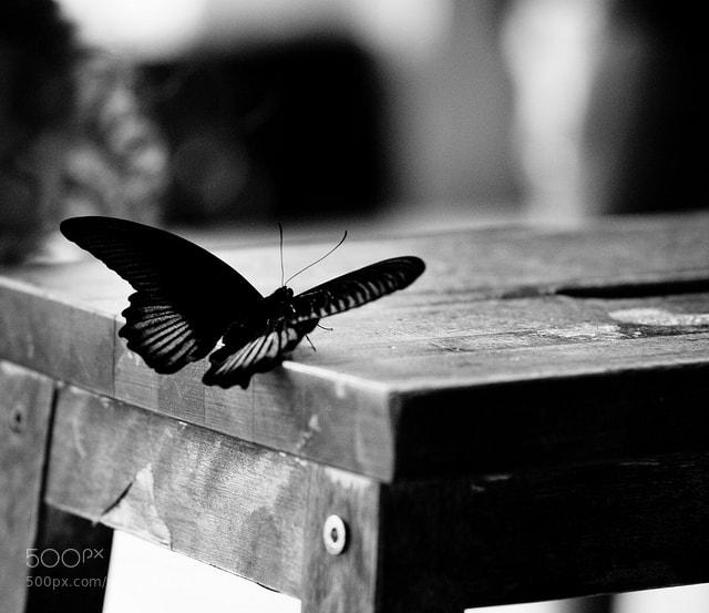 Photograph Butterfly... by Aleksandra Loginova on 500px