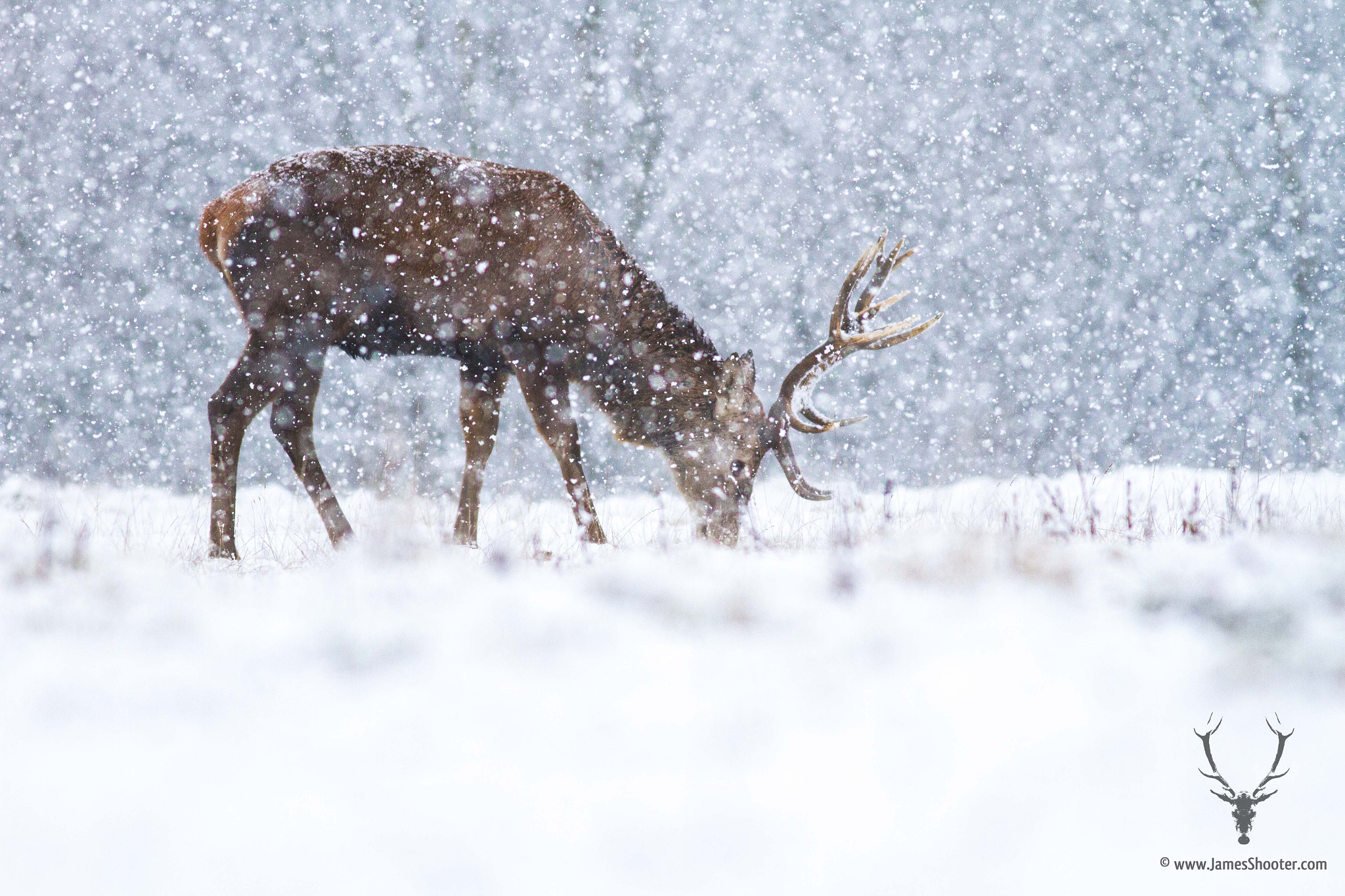Photograph In a Flurry by James Shooter on 500px