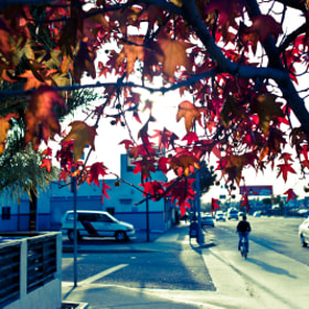 Even Los Angeles Gets Fall Color by Sean Denny (sedenny)) on 500px.com
