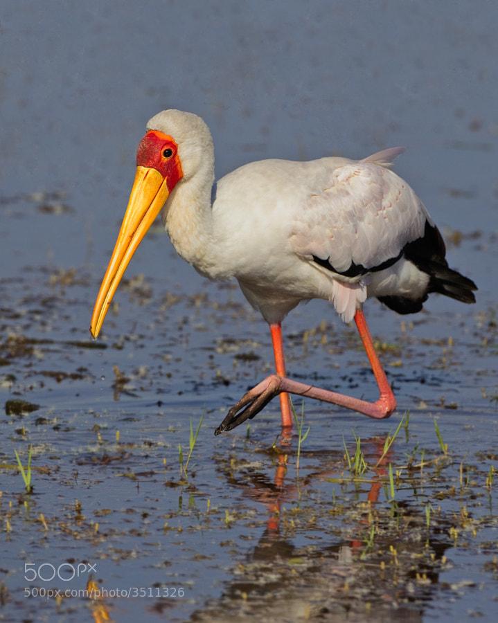 Found this friendly bird on the shores of Kake Kariba, Matusadona National Park, Zimbabwe
