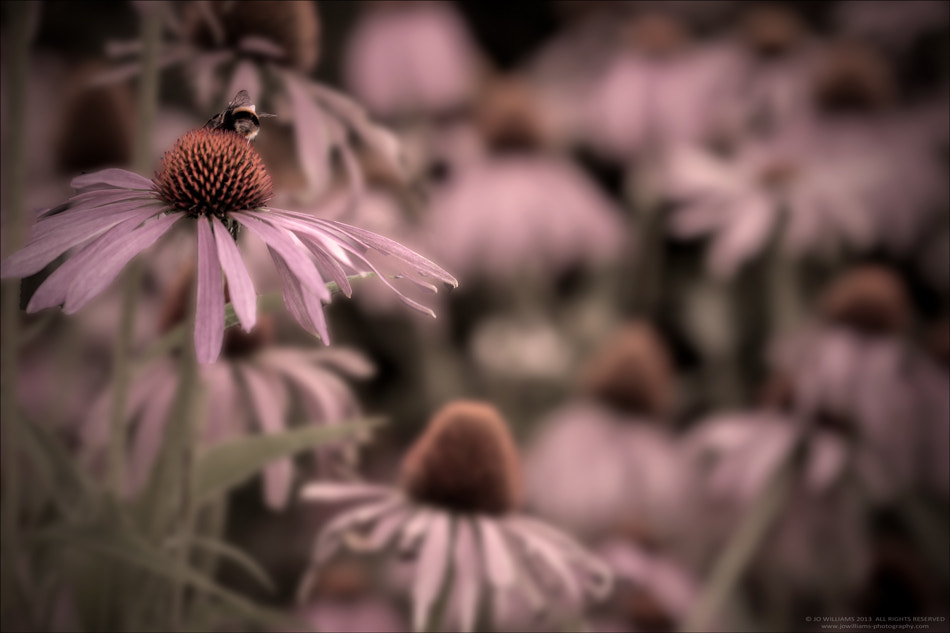 Photograph My World by jo williams on 500px