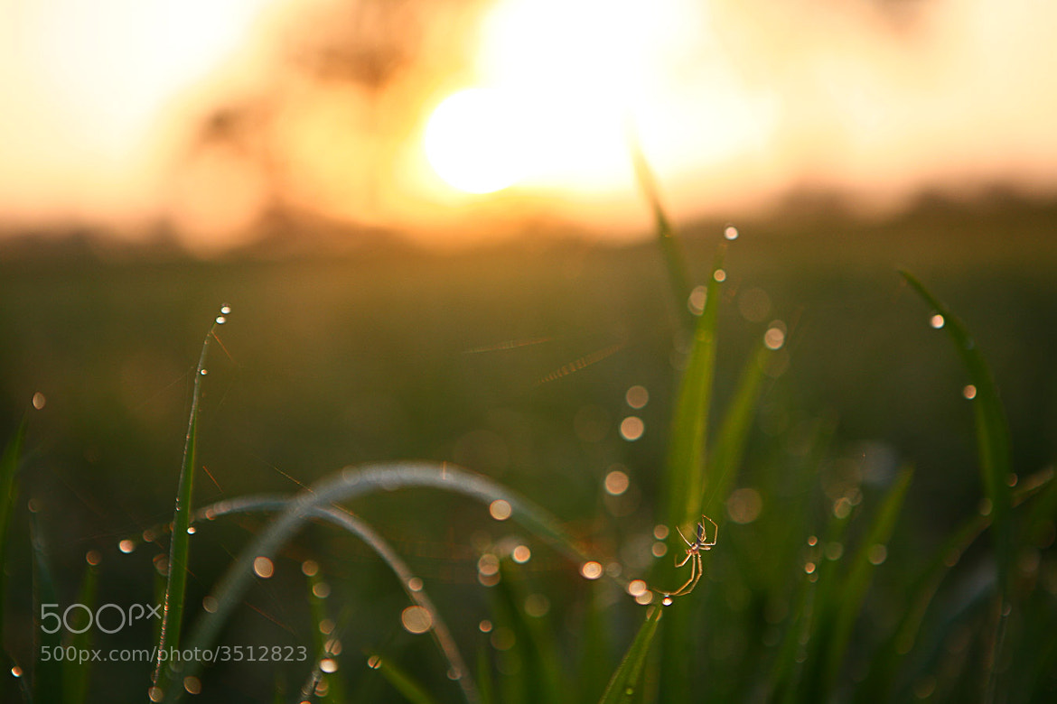 Photograph Iluminated by Dendy Julius on 500px