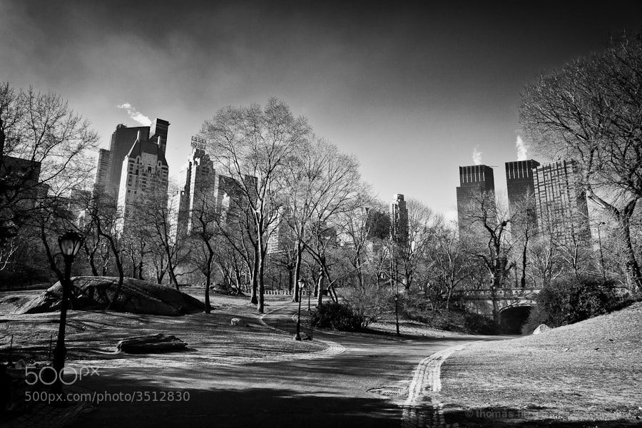 A Black and White image of the central park skyline in winter