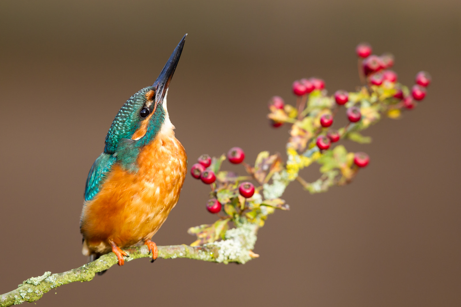 Photograph Kingfisher by Keith Humphrey on 500px
