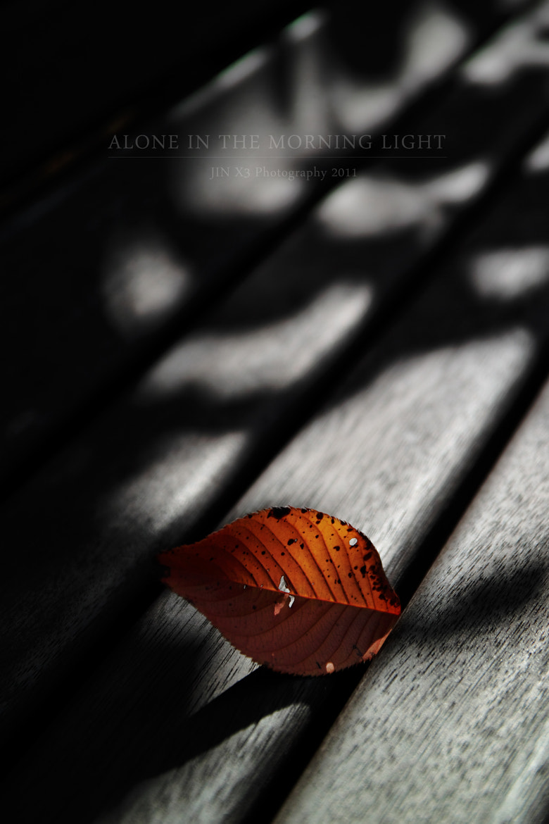 Photograph Alone in the Morning Light by Junya Hasegawa on 500px
