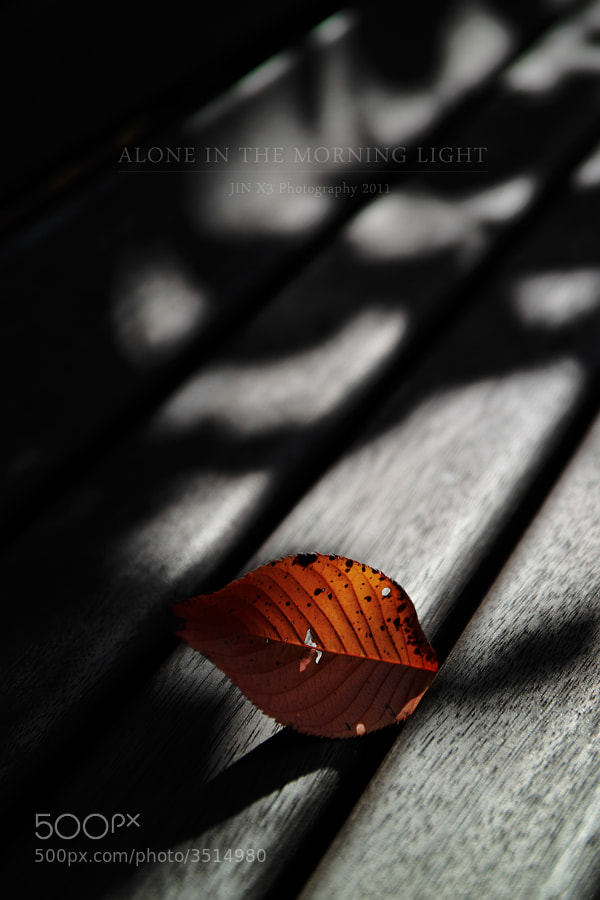 Alone in the Morning Light by Junya Hasegawa (JIN-X3)) on 500px.com