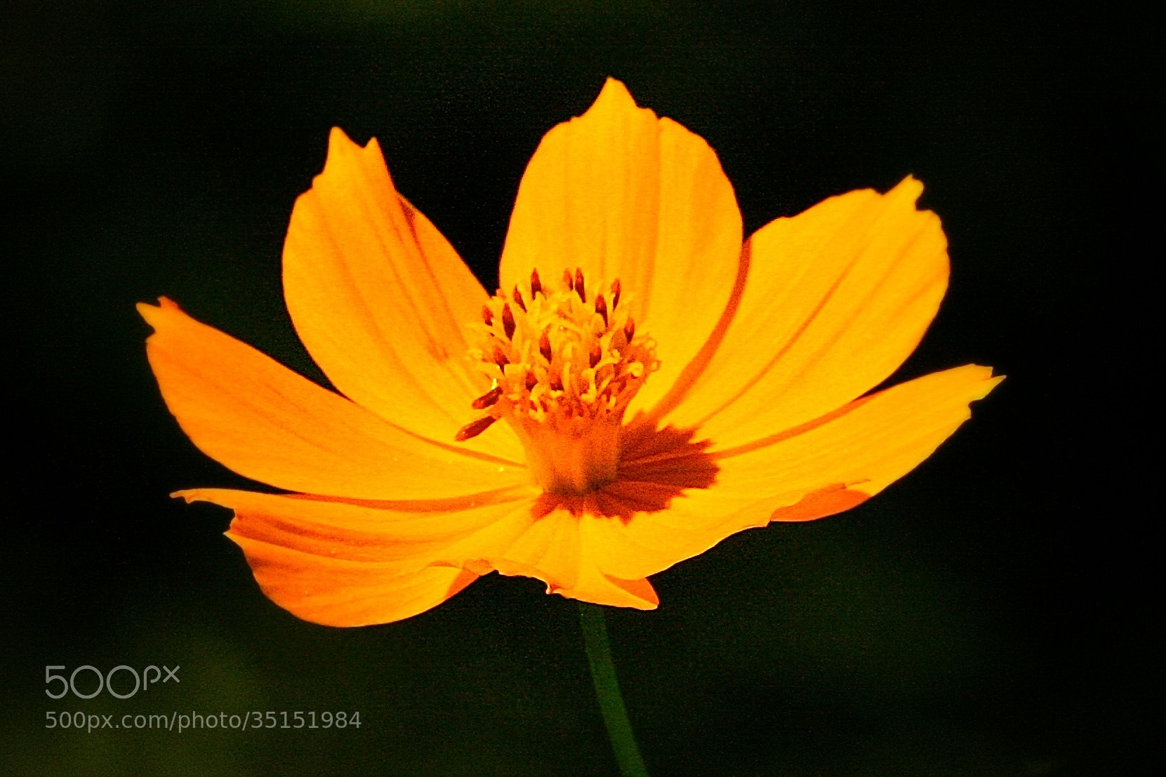 Photograph Kissed by the Sun! by Karthik Gellia on 500px