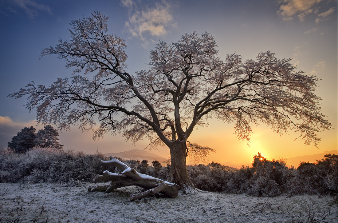 Photograph Winter Sunset by Gary McParland on 500px