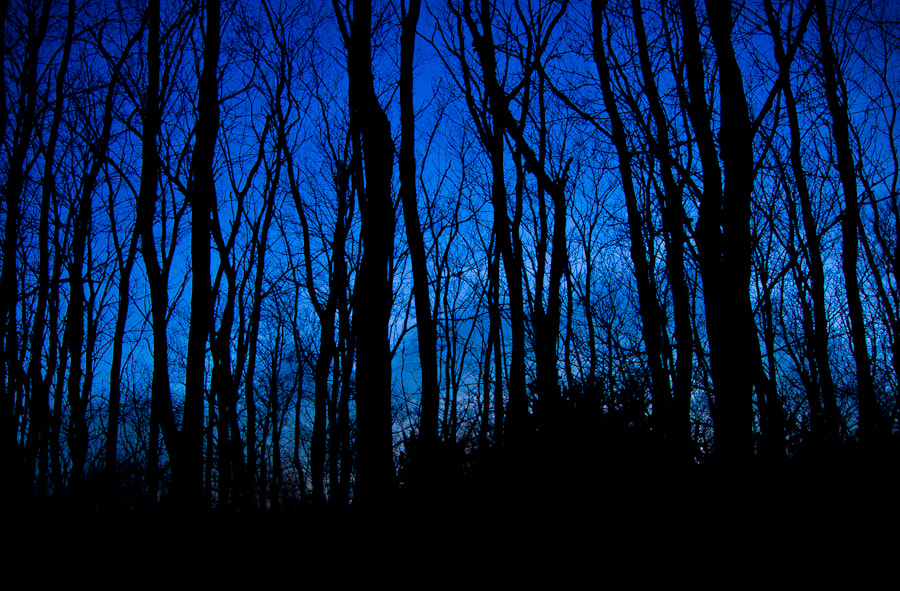 Photograph Blue Forest by Josh  on 500px