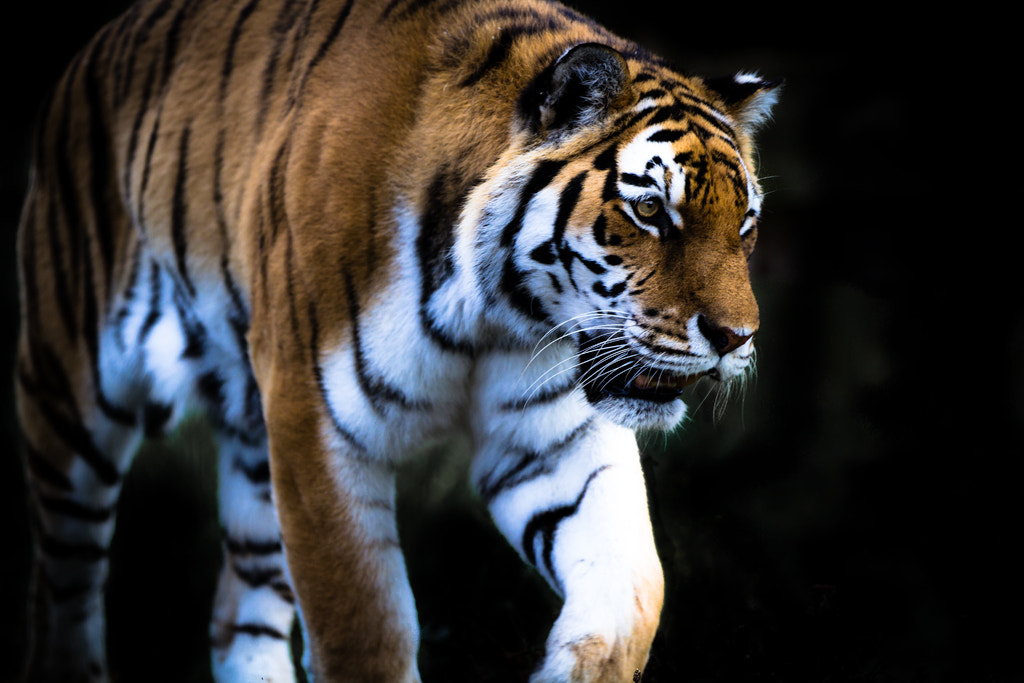 Photograph Lunch prowl by Carl Stovell on 500px