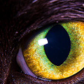 Cat Eye by Yuri Ivačković on 500px.com