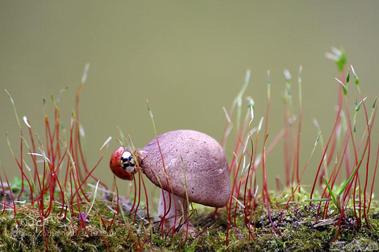 Photograph In Wonderland by Vie Lipowski on 500px