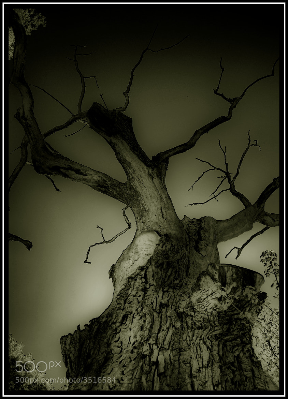 Photograph Untitled by Sebastian Grabowski on 500px