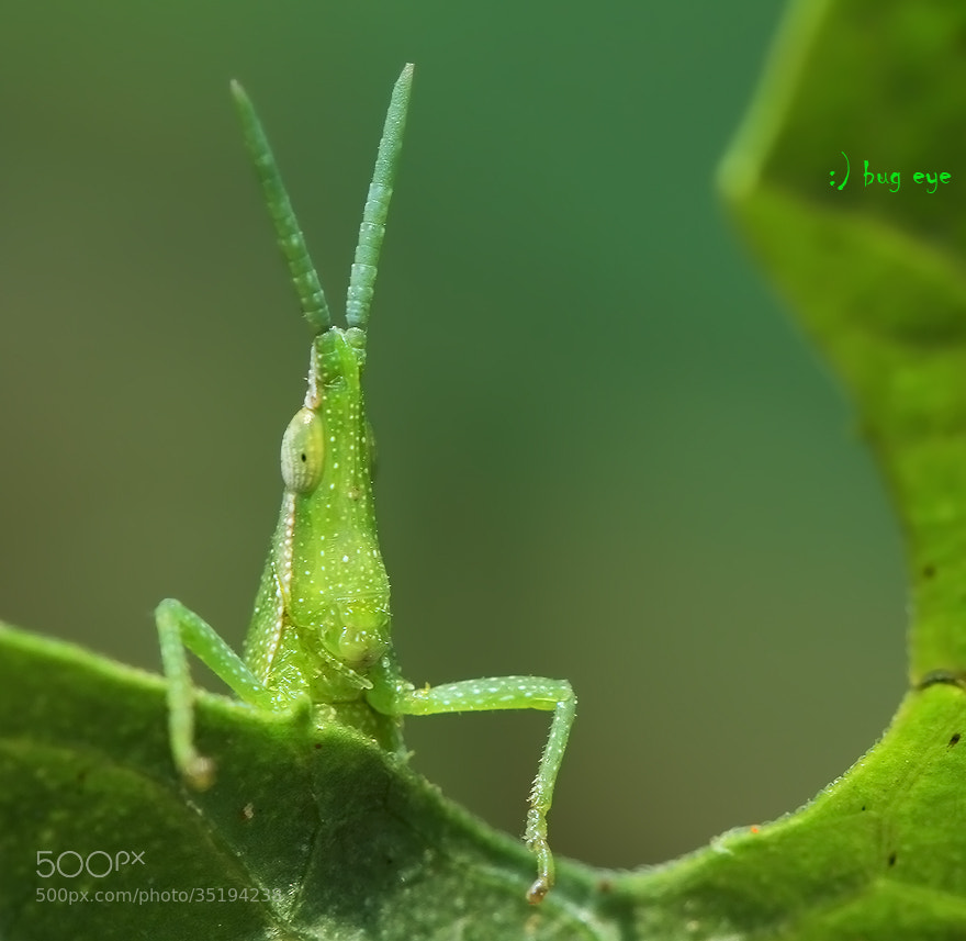 Photograph hi Friday ! by bug eye :) on 500px