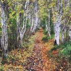 Late fall scene of favorite Acadia subject