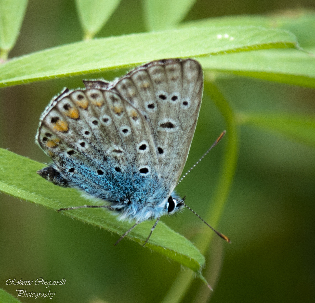 Photograph Borboleta Azul ! by Roberto Cinganelli on 500px
