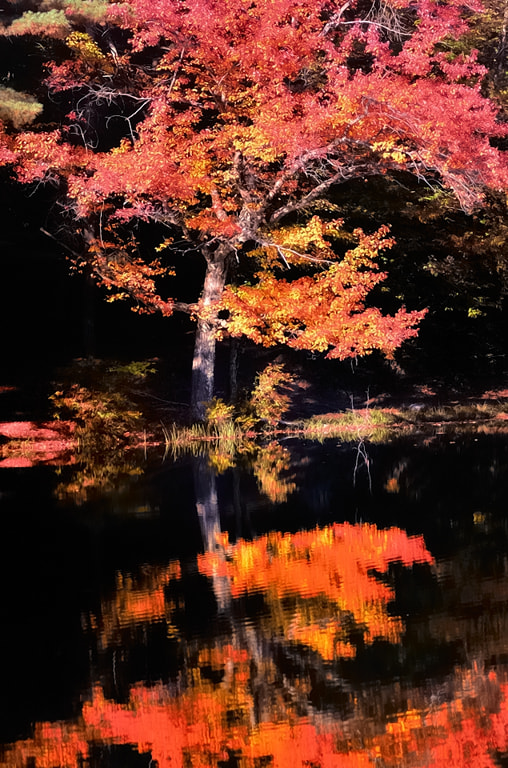 Photograph Mirrored Fall by Aperture Geek on 500px