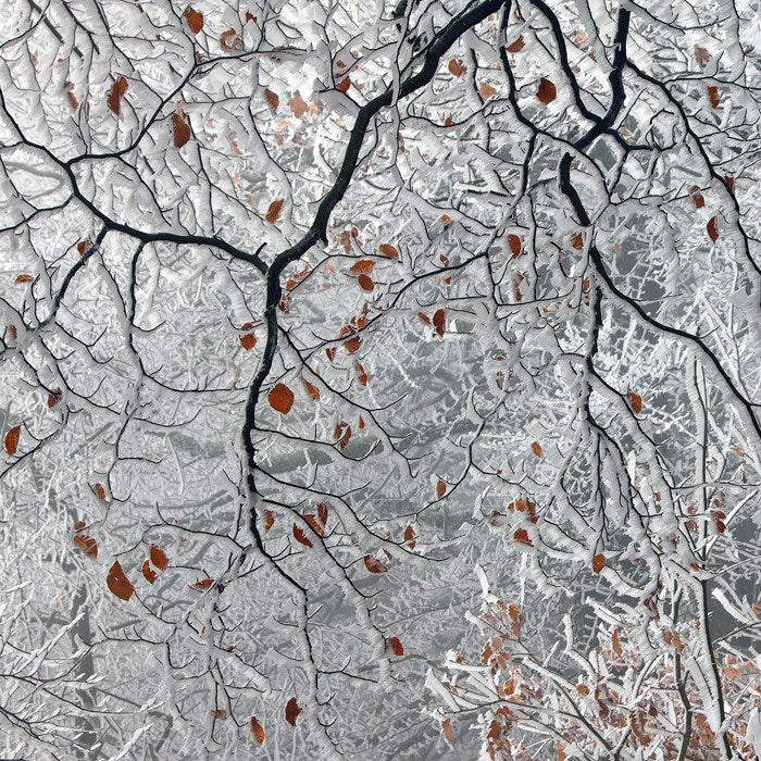 Photograph The Last Leaves by Martin Rak on 500px
