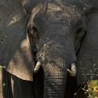 South Luangwa National Park, Zambia