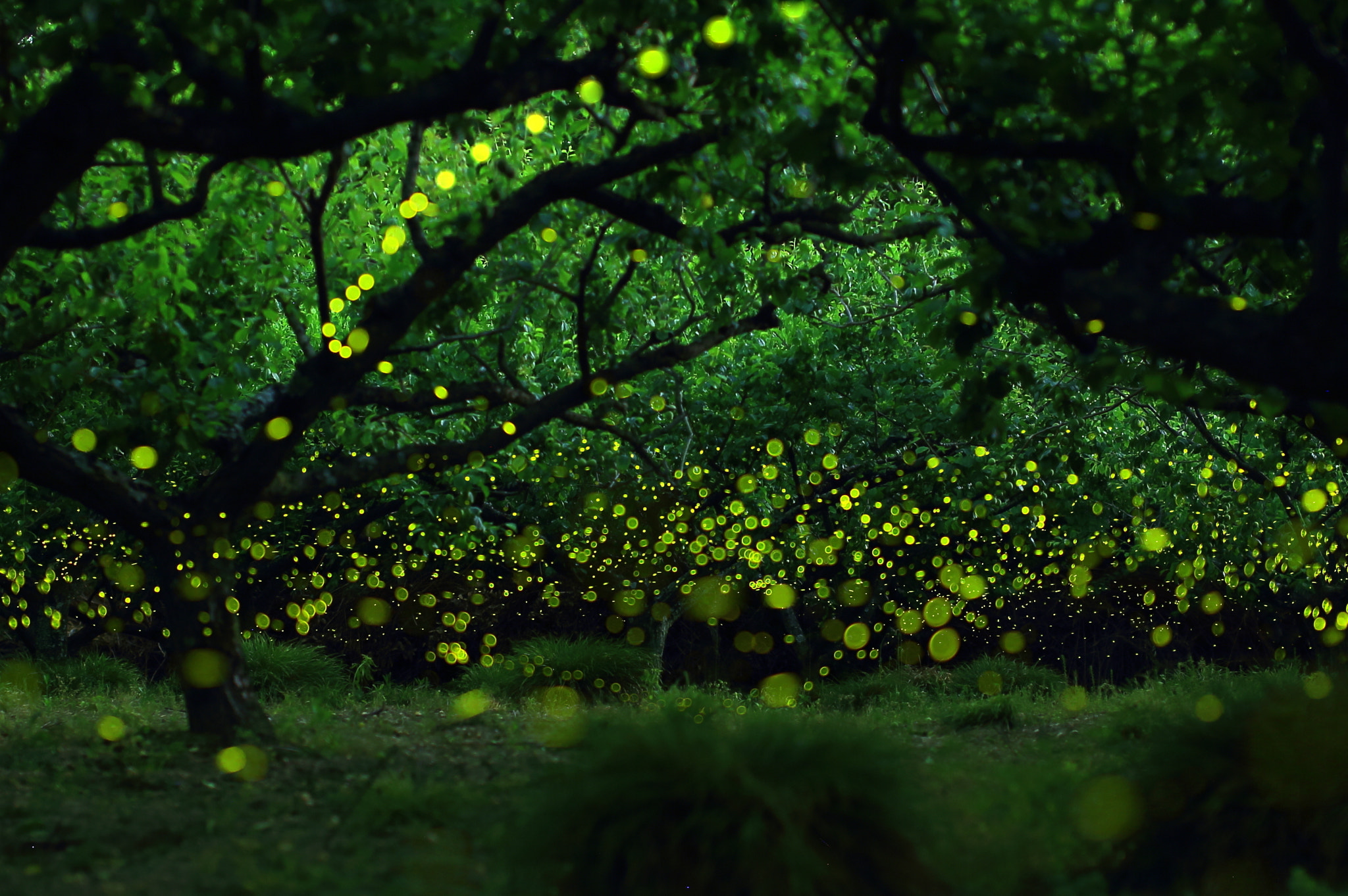 Photograph Fairies Forest (Firefly) by yume . on 500px