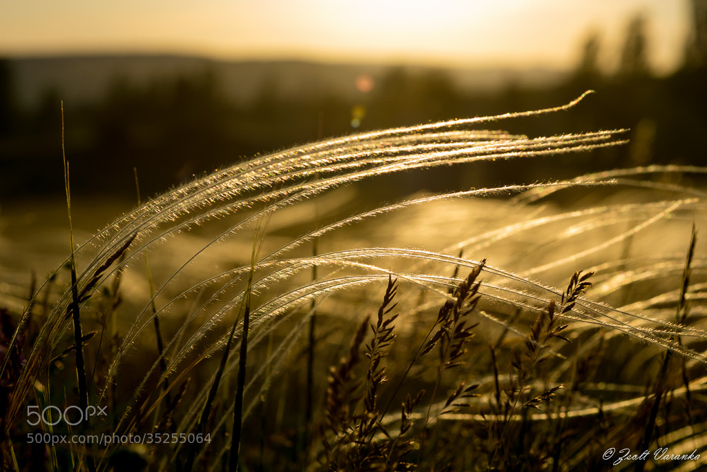 Photograph stipa by Zsolt Varanka on 500px