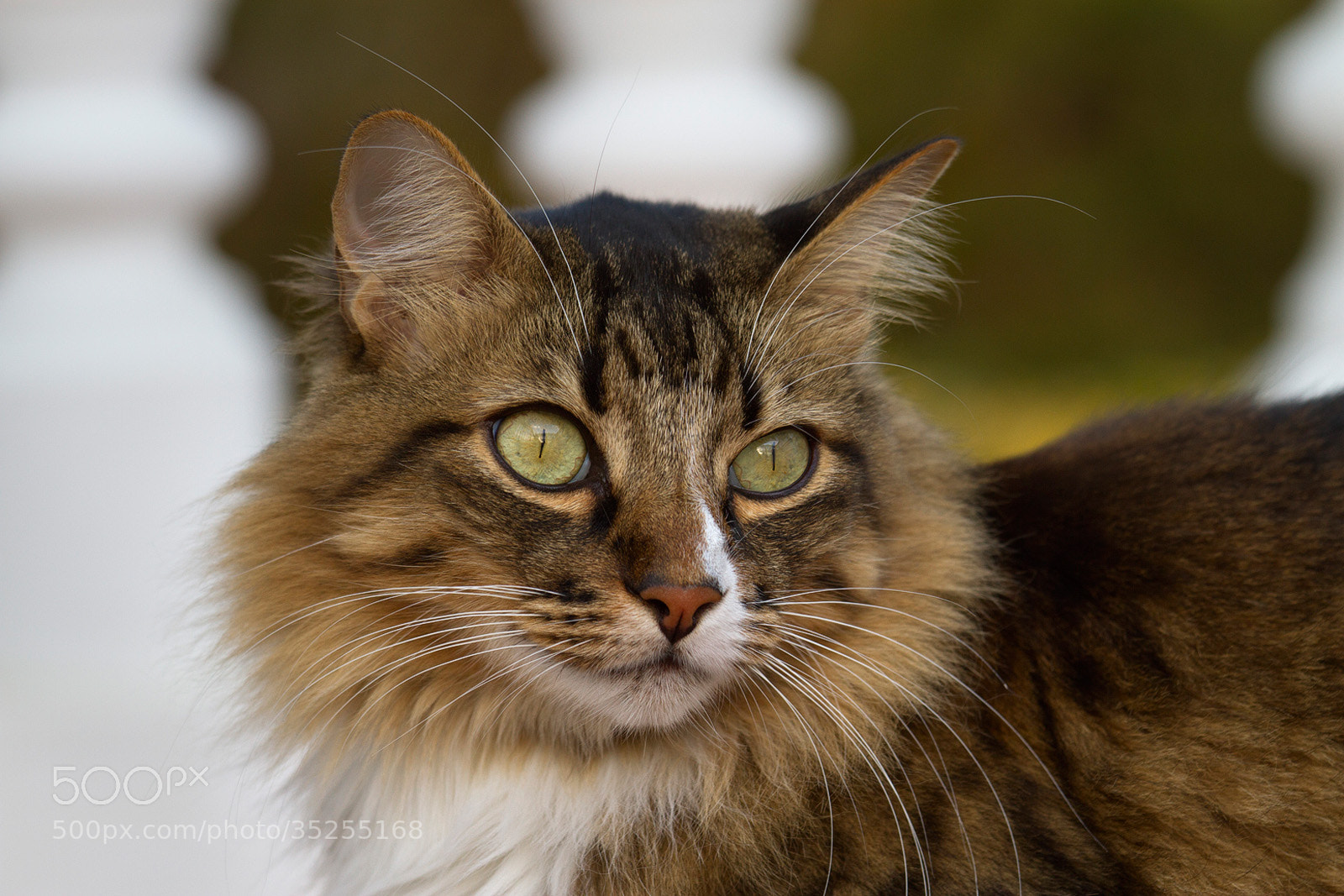 Photograph Cat (I) by José Antonio Sánchez on 500px