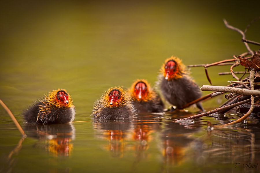 Photograph Ugly Chicks by Tobias Kuhl on 500px