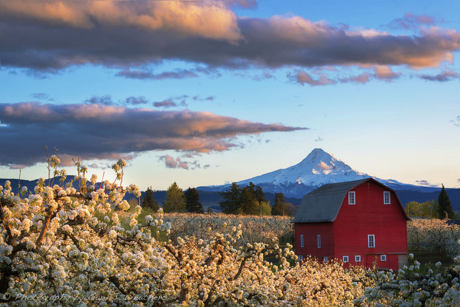 Photograph Hood River Valley at blossom time by Gary Weathers on 500px