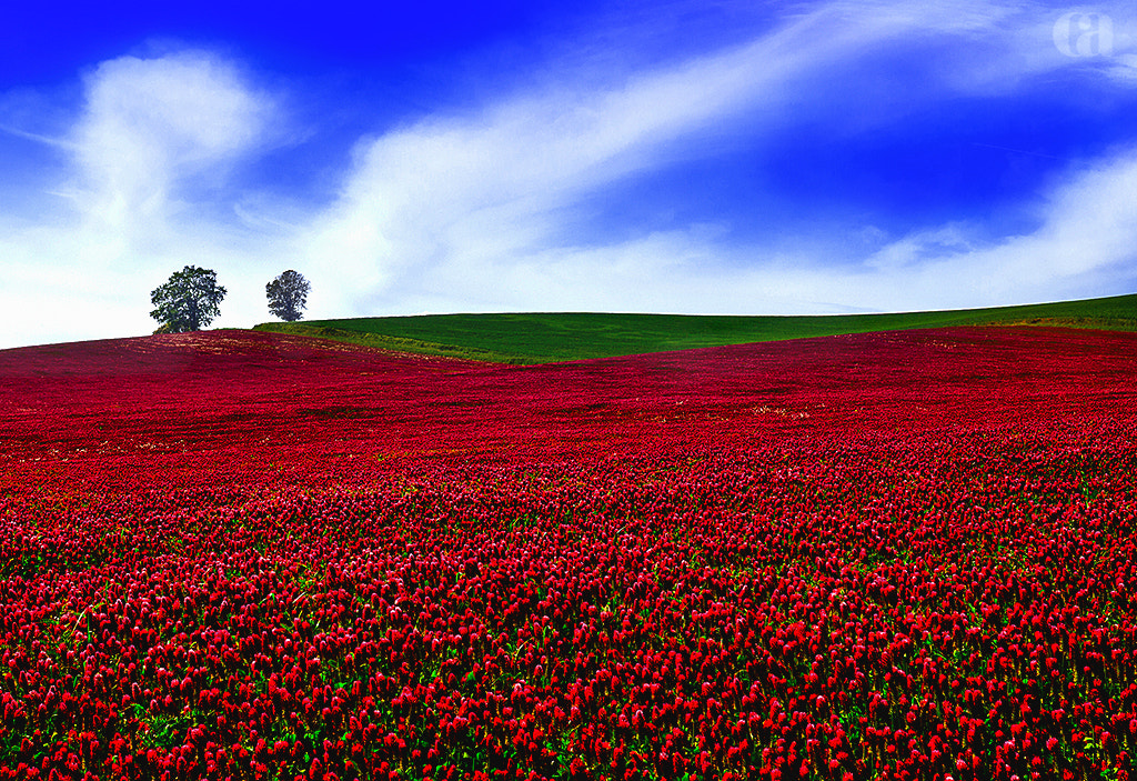 Photograph Two Tree Hill by Christina Angquico on 500px