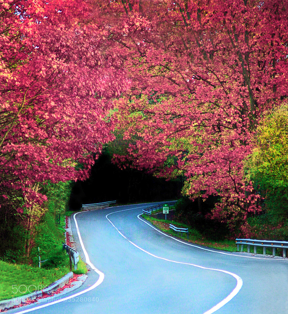 Photograph Carretera sinuosa by Jabi Artaraz on 500px