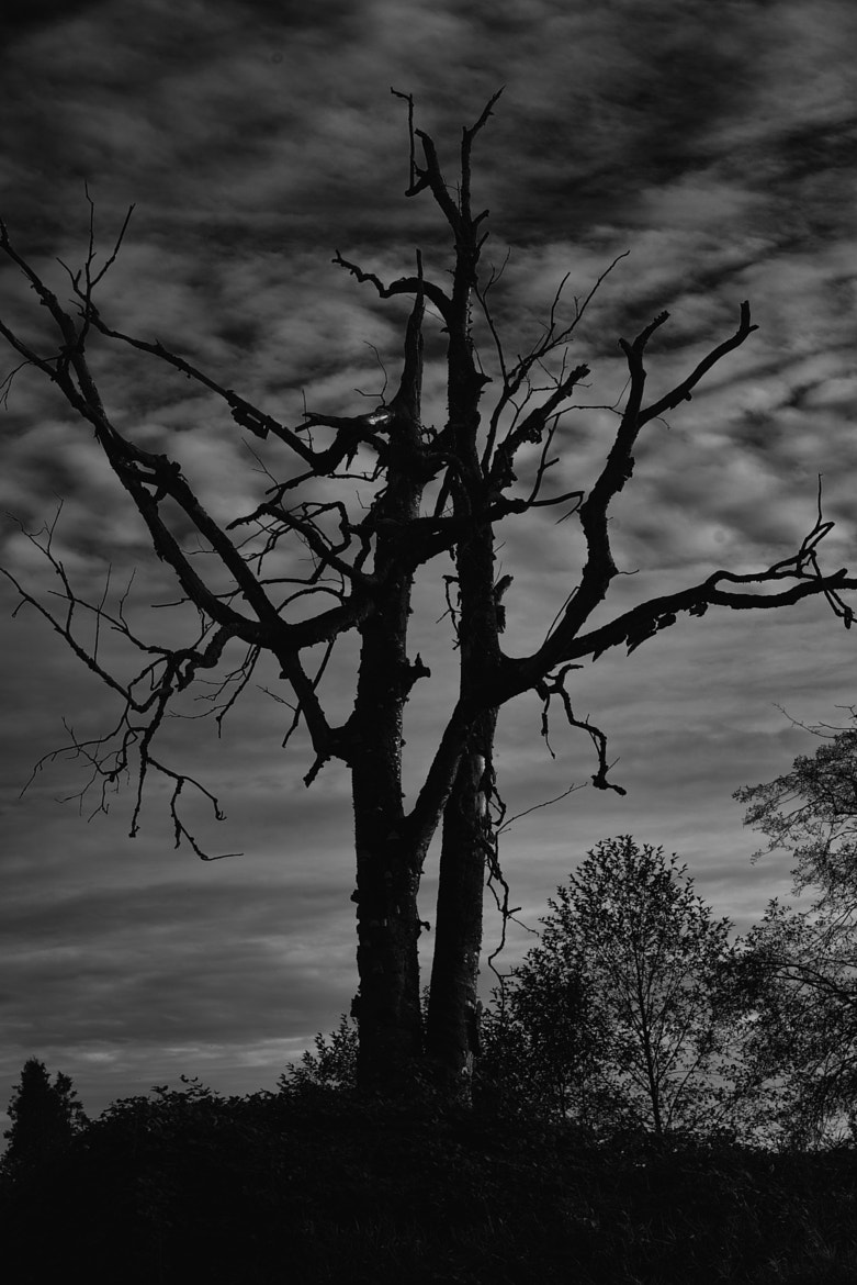 Photograph A Sinister tree by 1dirtboy on 500px