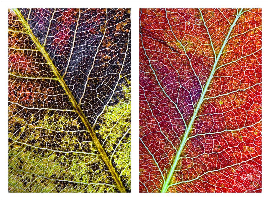Photograph Autumn leaves by Giorgio Baruffi on 500px